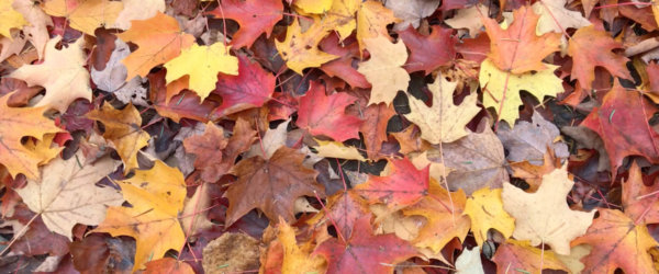 Fall Leaves in Maine