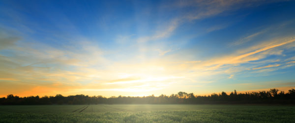 Sunrise on Fields with Forest in Background
